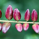 Lipstick Leaves by Astrid Ewing Photography