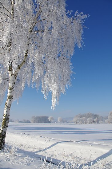 Winterland by Aviana