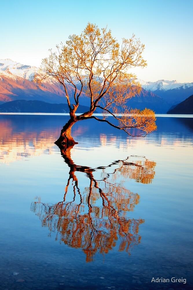 That Wanaka Tree by Adrian Greig
