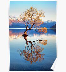 That Wanaka Tree Poster