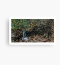 Wooded Stream Canvas Print