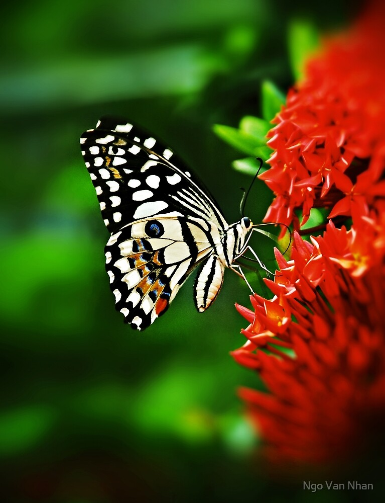 Beautiful Butterfly on Red Flowers by Van Nhan Ngo