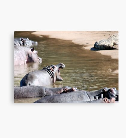 OK MR. CROC, SEE IF I'M SCARED! - Hippopotamus amphibious Canvas Print