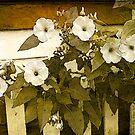 Morning Glory Bush _Card by Diane Johnson-Mosley