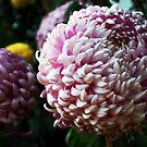 Crysanthenum's by Lozzar Flowers & Art