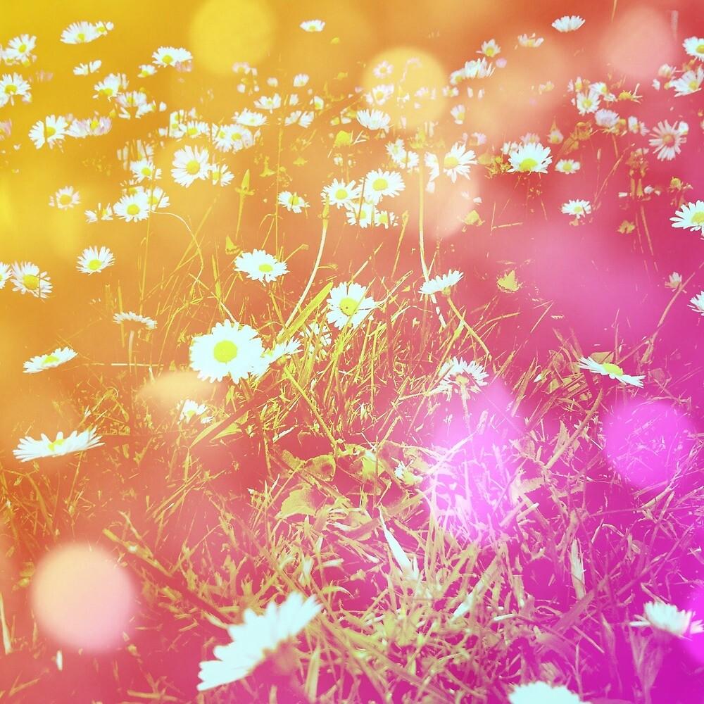 Wild purple daisy's  by issybunbun