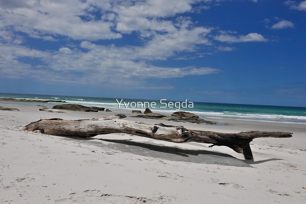 Driftwood at Denison by Yvonne Segda