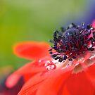 a spring time story by sapaho