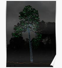 Tall Pine in Lights Poster