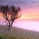 Misty Sunrise, near Kendal, Cumbria by Dave Lawrance