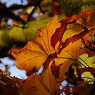 Pretty Autumn Colours by Themis