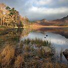 An Autumnal Blea Tarn by SteveMG