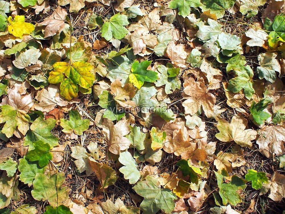 Fallen autumn leaves closeup on the ground by vladromensky
