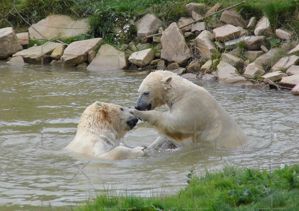 Polar Bears playing In Water by LoneAngel