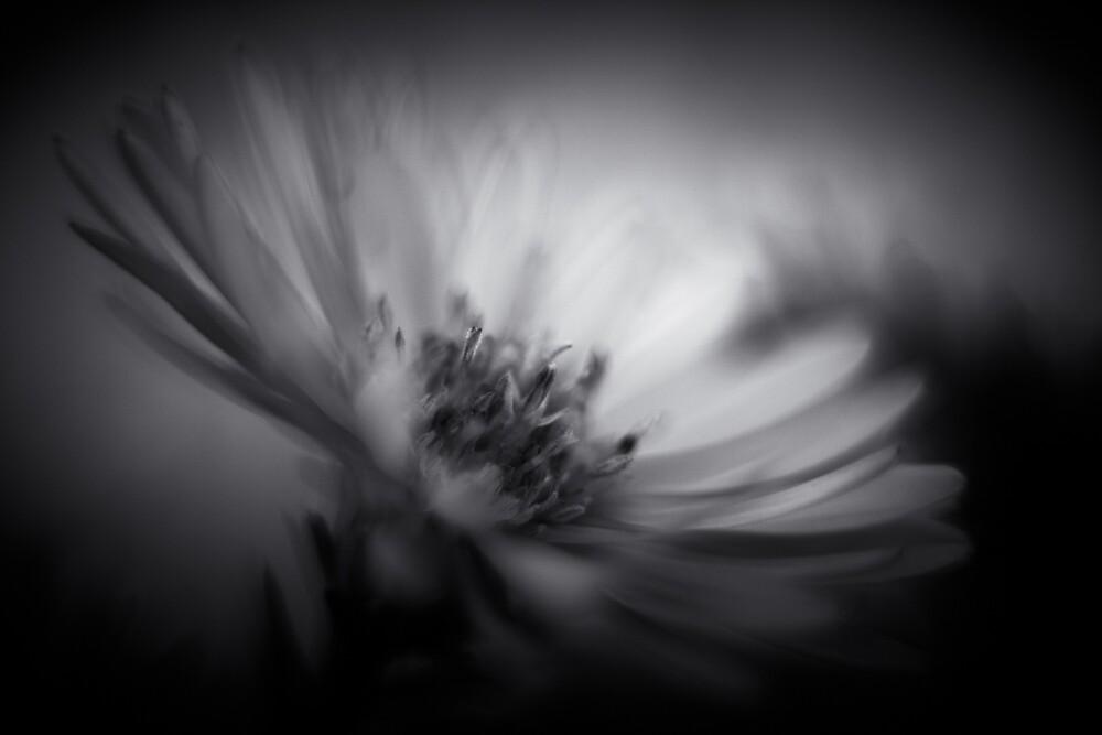 Flower B&W by CebotariN