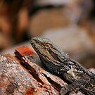 Bush Dragon by Erland Howden