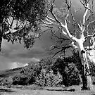 Australia in Black and White by waxyfrog