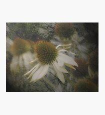 Opaque Photographic Print