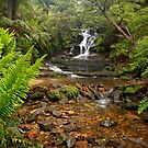 Leura Cascades by Joel  Haldane