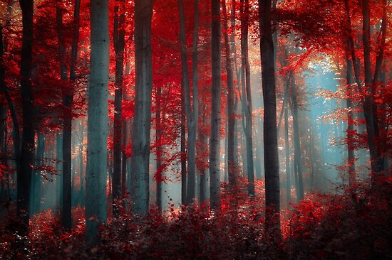 Fire an Flame by Ildiko Neer