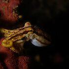 Mototi Octopus by Aziz T. Saltik