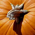 Peter Peter Punkin Eater by © Loree McComb
