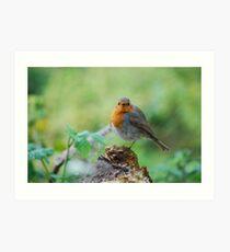 Merry Christmas Mr Robin Art Print