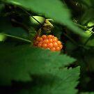 Wild Berry by Ellen Cotton