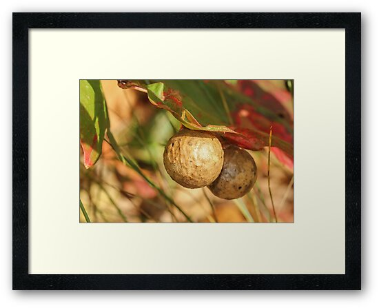 The Galls by Gary Horner
