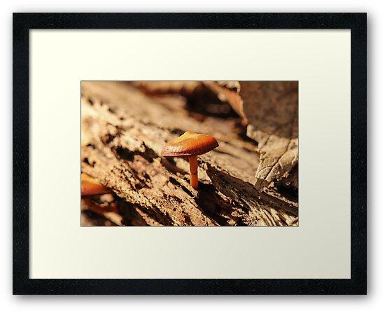 Mushroom Growing in Bark by Gary Horner