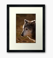 Wolf Outlined by the Sun Framed Print