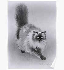 Alfie the Cat Poster