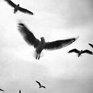 Freedom... by Mary Grekos