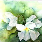 White Pansies by LinFrye