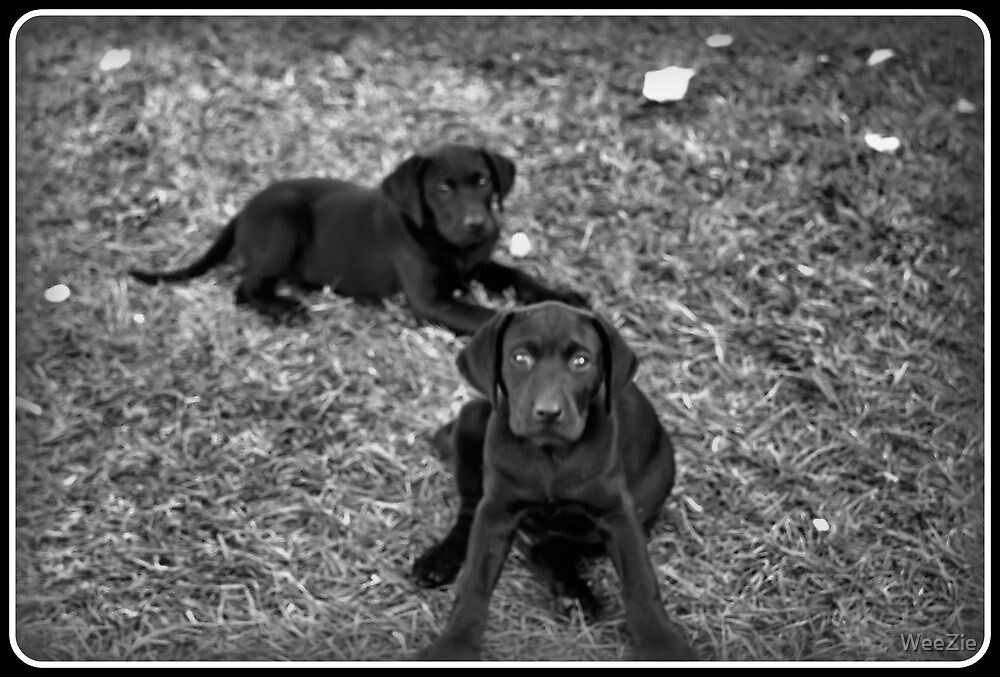 Really, We Did Not Do That!! by WeeZie