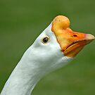 Grass Eater by Nick Boren