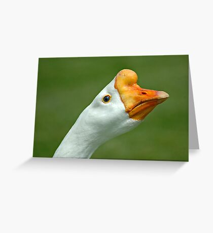 Grass Eater Greeting Card
