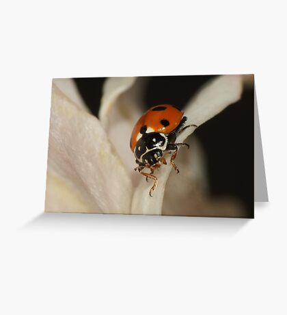 Spotted Amber Ladybird - Hippodamia variegata Greeting Card