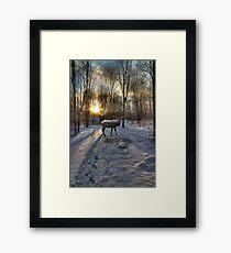 Winter Elk Framed Print
