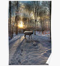 Winter Elk Poster