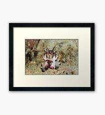 Flamboyant cuttlefish - Metasepia pfefferi Framed Print