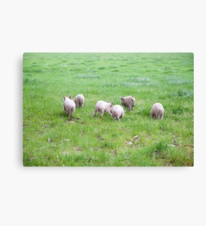 and they ran all the way home... Canvas Print