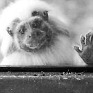 Can I come out now? by Kristi Robertson