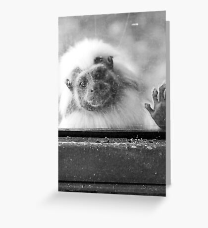 Can I come out now? Greeting Card