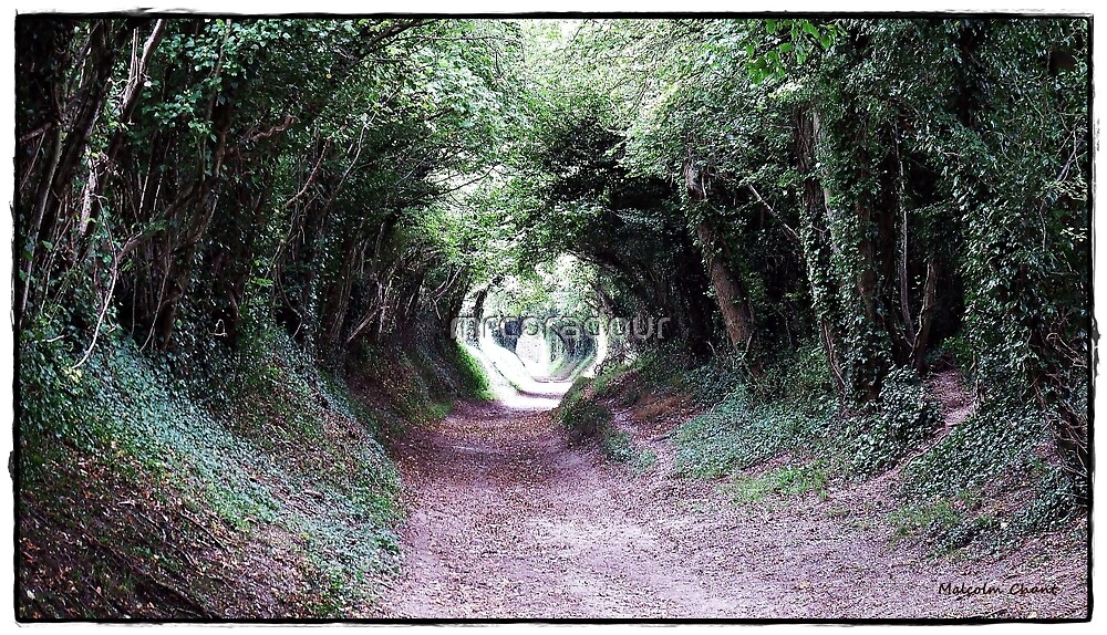 The Tunel of trees by Malcolm Chant