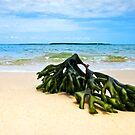 Washed Up! - North Stradbroke Island Qld Australia by Beth  Wode
