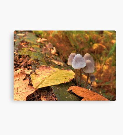 Woodland Autumn Canvas Print