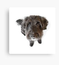 Hairy Dog Photographic Caricature Canvas Print