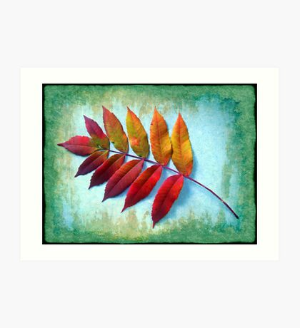 Color of the Sumac Art Print