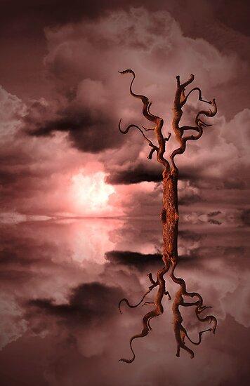Sun Set Dream by Christine Lake